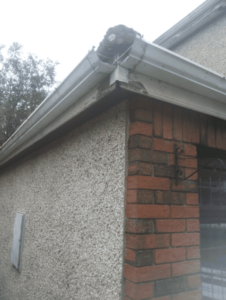 Gutter Replacement in Bristol