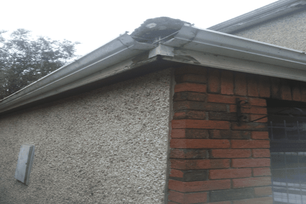 Fascia Board Gutter Replacement in Bristol