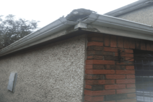 Fascia Soffit and Gutter Replacement Bristol
